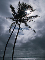Silhouette of palm trees against a stormy sky, Waikiki Beach, Honolulu, O'Ahu, Hawai'i