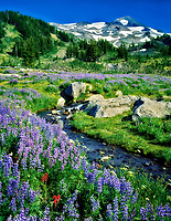 Lupine and paintbrush with small creek and South Sister Mountain. Three Sisters Wilderness, Oregon