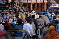 Asie/Inde/Rajasthan/Jaipur : Attelage de dromandaires dans le traffic sur Choti Chaupar