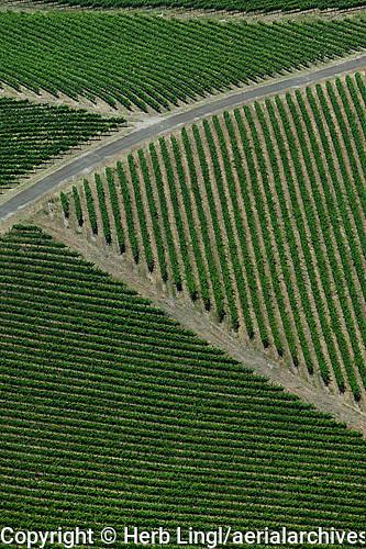 Aerial photograph vineyard rows Sonoma County California