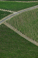 Aerial photograph vineyard rows Sonoma County California