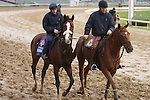 Union Rags , trained by Michael Matz and to be ridden by Javier Castellano , exercises in preparation for the 2011 Breeders' Cup at Churchill Downs on November 4, 2011.