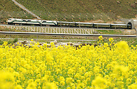A train emerges from a tunnel on the Tibet railway in Toling Valley, Tibet, China. Some 3% of the route between Golmud in Qinghai province and Lhasa in Tibet is composed of bridges and tunnels, according to official figures.  .08 Jul 2006.