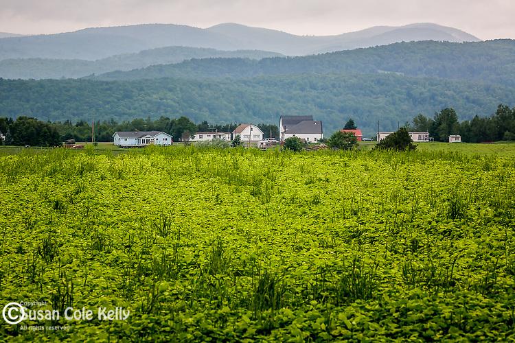 Potato fields in New Canada, Aroostook County, ME