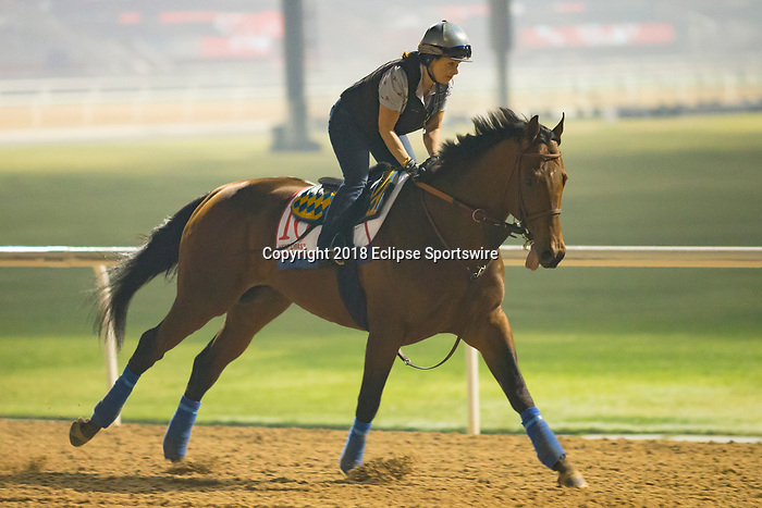 DUBAI,UNITED ARAB EMIRATES-MARCH 29: West Coast,trained by Bob Baffert,exercises in preparation for the Dubai World Cup at Meydan Racecourse on March 29,2018 in Dubai,United Arab Emirates (Photo by Kaz Ishida/Eclipse Sportswire/Getty Images)