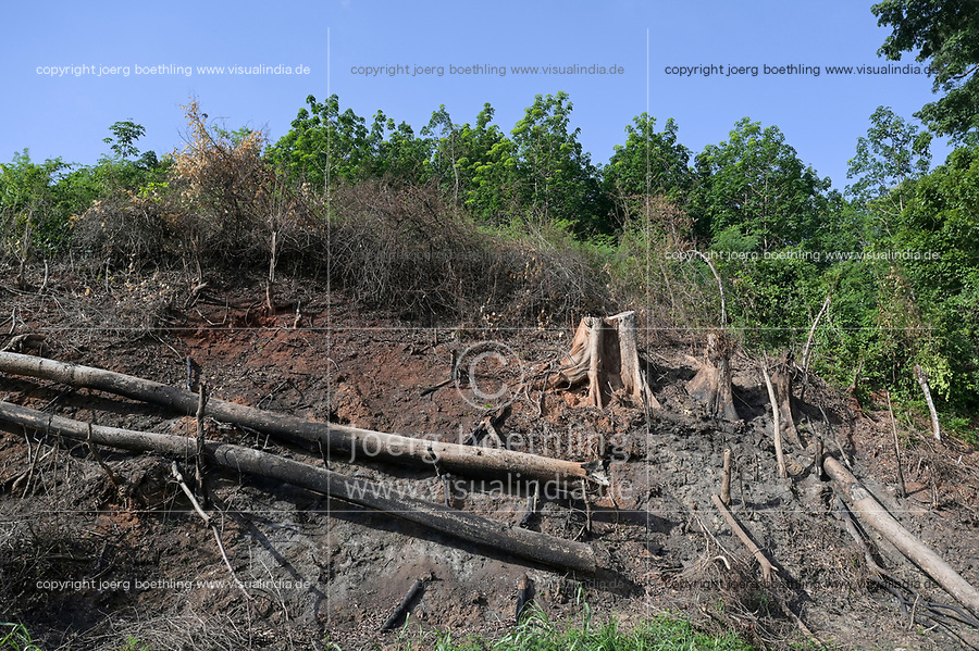 IVORY COAST, Yamoussoukro, deforestation for new plantaions like oil palms, rubber and timber trade / ELFENBEINKUESTE, Yamoussoukro, Abholzung für Plantagen und Holzhandel