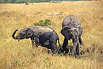 Young Elephants After Wallowing In The Mud