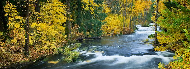 Trout Lake Creek in fall color. Washington