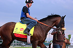 LOUISVILLE, KY - MAY 04: Trojan Nation (Street Cry x Storm Song, by Summer Squall) is led onto the track at Churchill Downs, Louisville KY, with exercise rider Andy Durnin.He is pointed toward the Kentucky Derby. Owner Julie Gilbert and Aaron Sones, trainer Patrick Gallagher. (Photo by Mary M. Meek/Eclipse Sportswire/Getty Images)