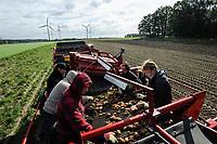 Germany, Lower Saxonia, harvest of organic potatos at Bioland farm with harvester machine  / DEUTSCHLAND, Biohoefe Oldendorf GbR, ein Bioland Erzeuger,  in Natendorf, Niedersachsen, Ernte von Biokartoffeln der Sorte Ditta mit Grimme Rodemaschine und Fendt Traktor