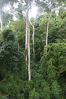 Tree canopy rope walk, Kakum National Park, Ghana..Photograph by Peter E. Randall
