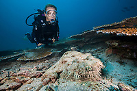 Tasselled wobbegong, Eucrossorhinus dasypogon, and woman scuba diver, Triton Bay, West Papua, Indonesia, Pacific Ocean