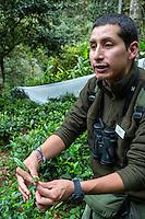 Peru, Machu Picchu Pueblo.  Peruvian Botanist Explaining Qualities of Camellia Sinensis Tea.
