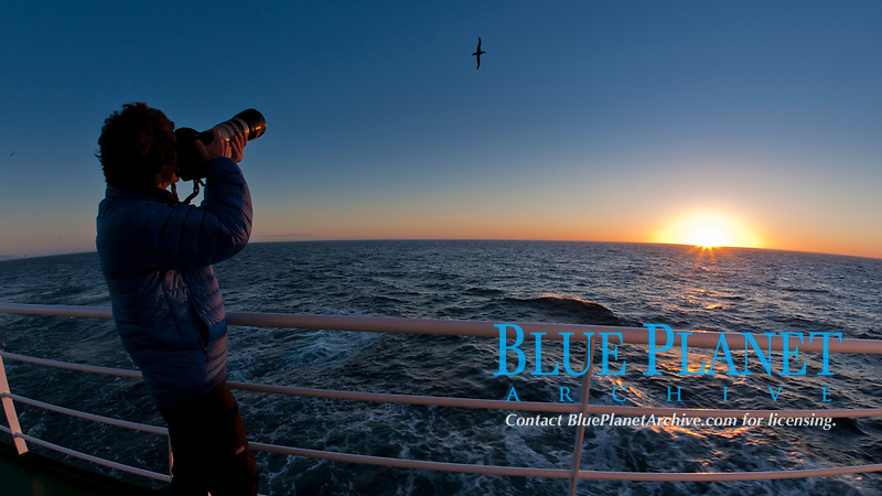 Photographing takes pictures of passing seabirds at sunset, from the deck of the M/V Polar Star.
