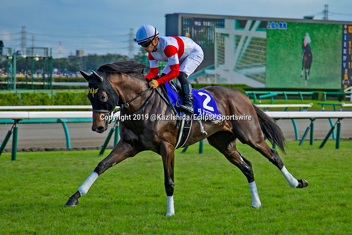 FUNABASHI,JAPAN-SEP 29: Danon Smash (3rd place), is post parading before the Sprinters Stakes at Nakayama Racecourse on September 29,2019 in Funabashi,Chiba,Japan. Kaz Ishida/Eclipse Sportswire/CSM