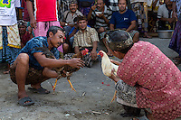 Bali, Indonesia.  Cock Fighting in an Indonesian Village.  Men Goad their Birds to Fight.