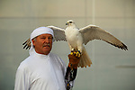 © Joel Goodman - 07973 332324. Manchester, UK  30/04/2012. Bryan Paterson, 65, from Bridgenorth in Shropshire and his 9 year old Gyr Falcon, Fern. Fern was born in England and trained to hunt smaller birds in Abu Dhabi. Mr Paterson is at the Manchester City Stadium on behalf of the Abu Dhabi tourist board. SportCity at the City of Manchester Stadium on the Etihad Campus , home of Manchester City Football Club . Photo credit: Joel Goodman