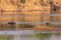 africa, Zambia, South Luangwa National Park, Luwanga river landscape