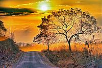 Estrada de terra e vegetaçao do cerrado em Rosaio Oeste. Mato Grosso. 2013. Foto de Antonio Siqueira.