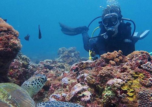 Rosalie Bailie diving off Diani Beach in Kenya