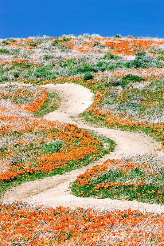 Path through Antelope Valley Poppy Preserve, California