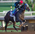 October 26, 2014:  Living the Life, trained by Gary Mandella, exercises in preparation for the DraftKings Breeders' Cup Filly & Mare Sprint or Turf Sprint at Santa Anita Race Course in Arcadia, California on October 26, 2014. Scott Serio/ESW/CSM