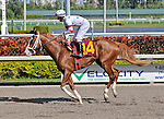 06 February 2010:  Person Of Intrest with jockey Robby Albarado in the Fifth race at Gulfstream Park in Hallandale Beach, FL.