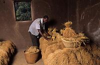 Afrique/Afrique de l'Ouest/Sénégal/Parc National de Basse-Casamance/Mlomp : Le grenier à riz de Julien