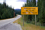 Near the summit of famous Lolo Pass on the Idaho-Montana border, a sign meant to protect wildlife for traffic is shot full of holes.  Lochsa River, Idaho, Lewis and Clark Scenic Byway, U.S. Highway 12 flows west from headwaters near Lolo Pass