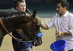 April 26, 2014 Bayern gets cooled off with water after the Derby Trial at Churchill Downs. He finished first but was disqualified.  Owner Kaleem Shah, trainer Bob Baffert, jockey Rosie Napravnik.