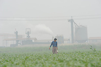 """A farmer tends to his crops in stifling pollution outside a cement plant at Xiditou.  Xiditou is known as one of China's worse """"cancer villages"""" where a reported ten percent have died from cancer."""