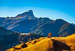 Italien, Suedtirol (Trentino-Alto Adige), Gadertal oberhalb Wengen: im Hintergrund der Gipfel Peitlerkofel (Sass de Putia) | Italy, South Tyrol (Trentino-Alto Adige), Val Badia above La Valle: at background summit Peitlerkofel (Sass de Putia)