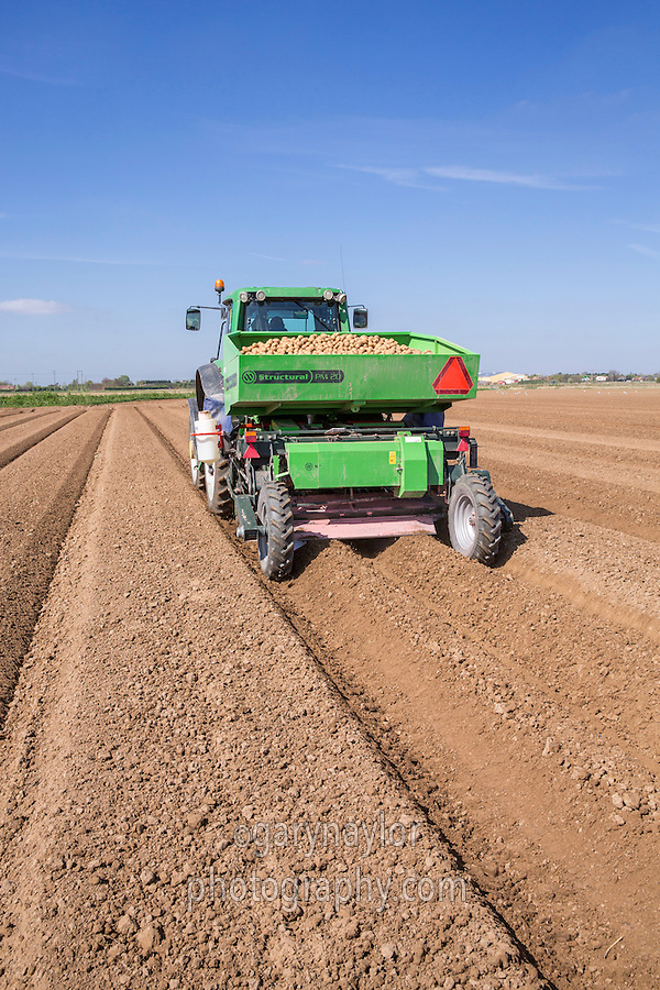 Planting Sapphire potatoes with a two row Miedema Structural PM20 planter - Licolnshire, April