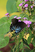 Flower and Butterfly