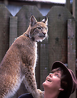 Animal handler with Lynx on shoulder. West Coast Game Park, Oregon.
