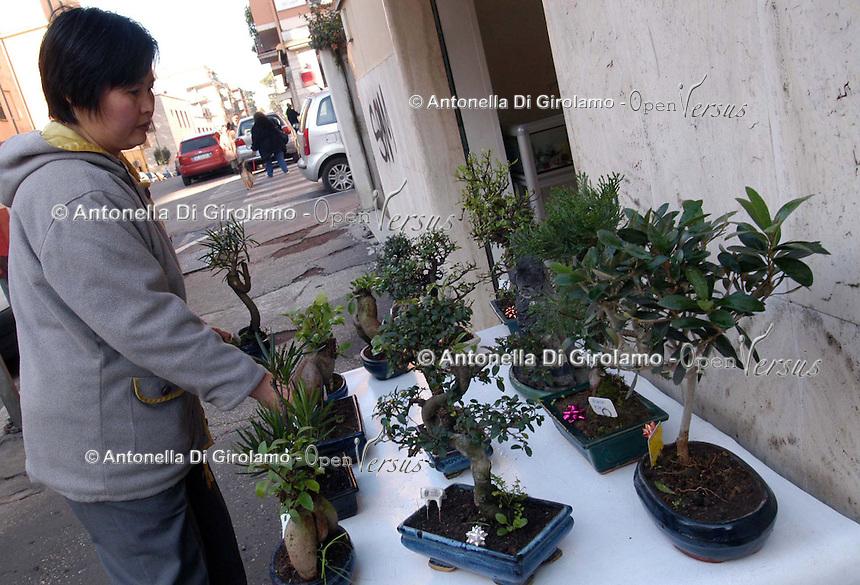 Negozio di bonsai a Roma gestita da una donna cinese..Bonsai shop in Rome managed by a Chinese woman.
