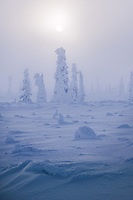 Sunset behind trees layered in rime ice on a foggy, cold afternoon in Alaska.