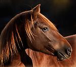 Horse Portraits and Closeups