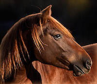Horse images by group