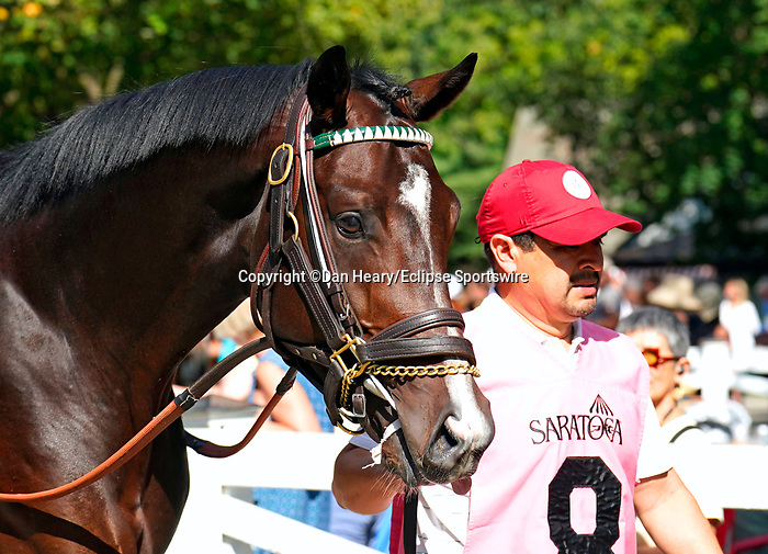 September 04, 2021: Galt #8, a full-brother to champion Songbird in the paddock before race 7, a seven-furlong maiden special weight at Saratoga Race Course in Saratoga Springs, N.Y. on September 4th, 2021. Dan Heary/Eclipse Sportswire/CSM