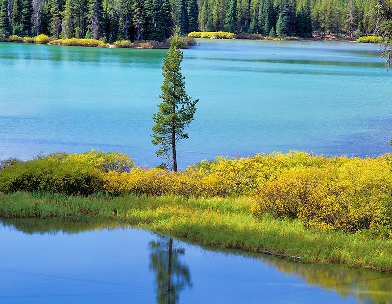 Lone tree and fall color at Devils Lake, Oregon.