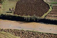 MADAGASCAR, highlands, rice cultivation, farmer till paddy field / MADAGASKAR, Reisfelder im Hochland bei Ambositra, Bauern pfluegen Felder