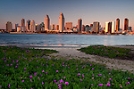 San Diego skyline with flowers and beach