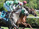 Shining Copper (no. 1), ridden by Jose Ortiz and trained by Chad Brown, wins the 4th running of the Lure Stakes for four year olds and upward on August 6, 2016 at Saratoga Race Course in Saratoga Springs, New York. (Bob Mayberger/Eclipse Sportswire)