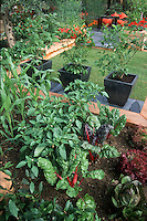 Rainbow chard in small space garden, lettuce, blueberries in pots, lawn grass, patio, raised beds in urban home garden