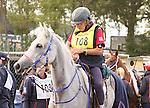 26 September 2010.  #108 Golden Lightning, ridden by Janice Worthington for team USA prepare to leave the vet check.