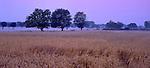 Europa, DEU, Deutschland, Nordrhein Westfalen, Niederrhein, Voerde, Landschaft, Getreidefeld, Morgenstimmung, Typische Kopfweiden, Nebel, Typische Landschaft im Naturschutzgebiet Momm Niederung im Voerder Stadtteil Mehrum...[Fuer die Nutzung gelten die jeweils gueltigen Allgemeinen Liefer-und Geschaeftsbedingungen. Nutzung nur gegen Verwendungsmeldung und Nachweis. Download der AGB unter http://www.image-box.com oder werden auf Anfrage zugesendet. Freigabe ist vorher erforderlich. Jede Nutzung des Fotos ist honorarpflichtig gemaess derzeit gueltiger MFM Liste - Kontakt, Uwe Schmid-Fotografie, Duisburg, Tel. (+49).2065.677997, fotofinder@image-box.com, www.image-box.com]