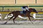 FUCHU,JAPAN-FEBRUARY 18: Sumahama #13,ridden by Yusuke Fujioka,wins the Hyacinth Stakes at Tokyo Racecourse on February 18,2018 in Fuchu,Tokyo,Japan (Photo by Kaz Ishida/Eclipse Sportswire/Getty Images)