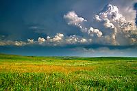 Prairies & Grasslands