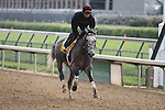Paddy O'Prado works over the Churchill Downs track in preparation for The Kentucky Derby.. 04.20.2010